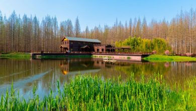 Photo of 江苏自然好风光之黄海森林公园