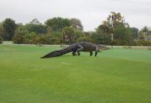 Photo of 同为巨鳄 命运大不同