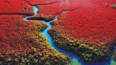 Photo of 世界旅游趣 红色海滩热情如火