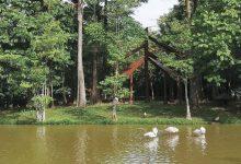 Photo of 行政之都布城:湿地公园骑行看鹤