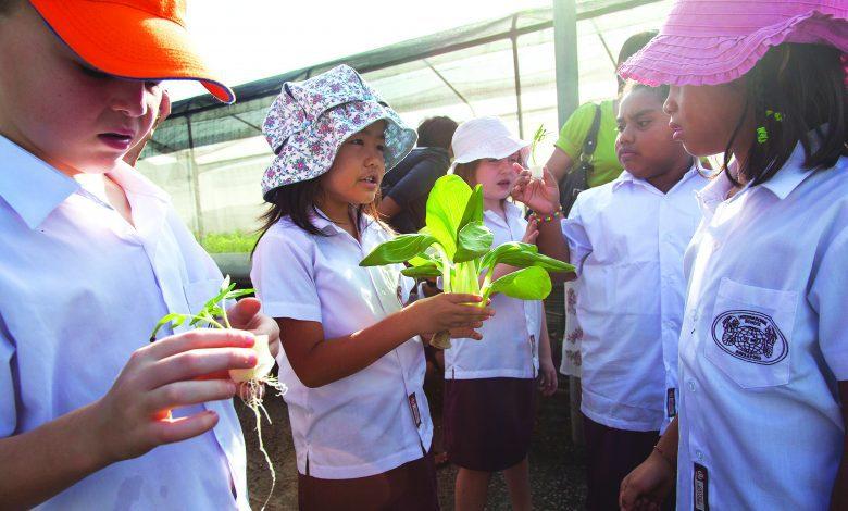 Photo of 市外农场 新加坡的庄稼人