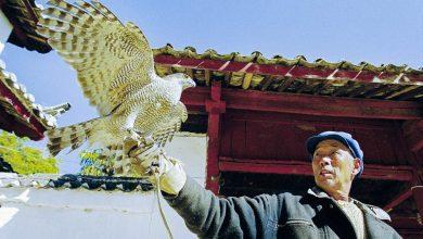 Photo of 古老而讲究的纳西族鹰猎