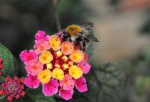 Photo of 有助保健的有机蜂蜜